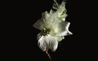 Separatore fiori 08